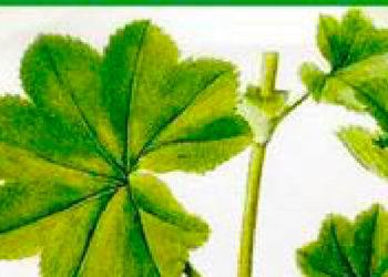 utilisation des plantes dans le domaine de la santé@2x